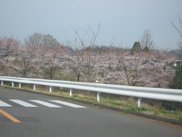 2009年4月8日 (2).JPG